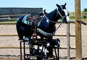 Stampede Horse Roper